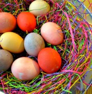 IMG_0672 Easter Egg hunt