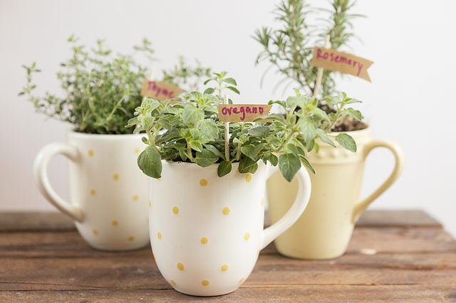 Mug Herb Garden